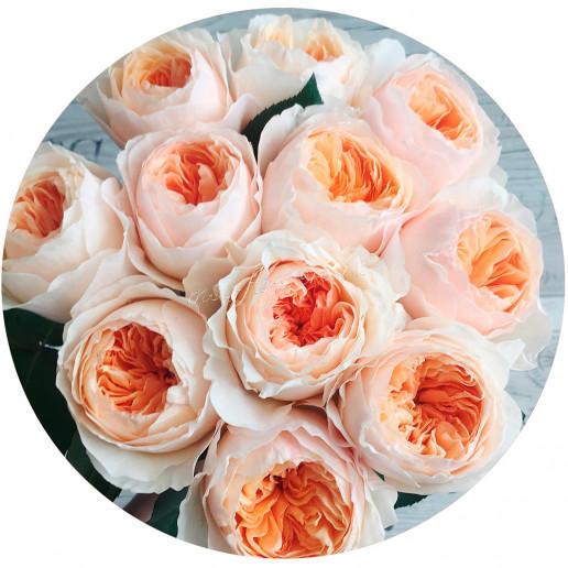Роза пионовидная Дэвид Остин Джульетта