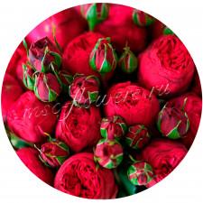 Роза кустовая ️Пиано Ред